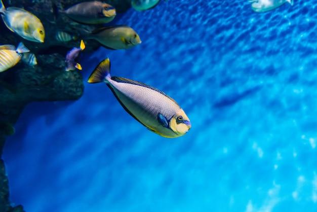 Tropische kleurrijke vissen zwemmen in een groot glazen aquarium