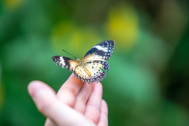 Tropische kleurrijke vlinder