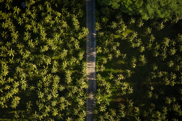 Tropische kokospalmen bos