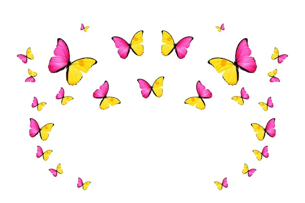 Tropische kudde vliegende gekleurde vlinders geïsoleerd op wit. tropische motten. vliegende insecten. hoge kwaliteit foto