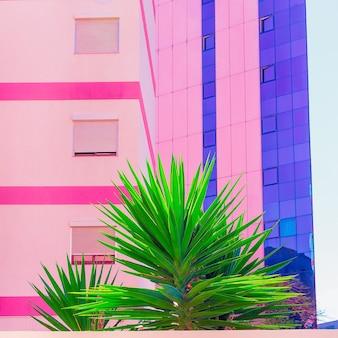 Tropische locatie. kleurrijke modevormgeving. palmen en stedelijk. minimale kunst