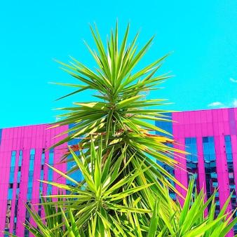 Tropische locatie. palmen en stedelijk. minimale kunst