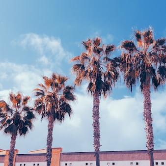 Tropische mode minimaal. palm en stedelijke locatie. kunst kleur ontwerp