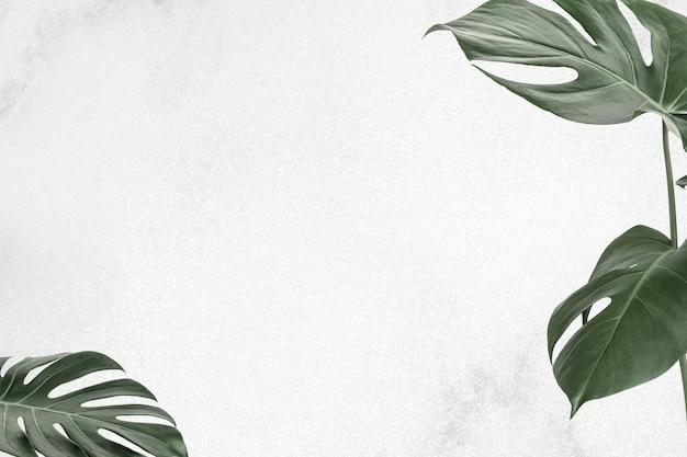 Tropische monstera blad grens frame blad banner achtergrond