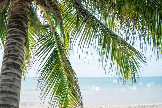 Tropische natuur schoon strand en wit zand