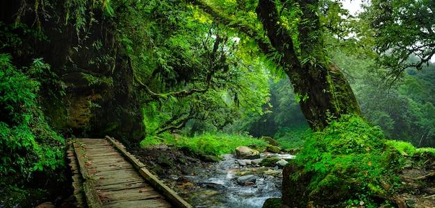 Tropische oerwouden van zuidoost-azië