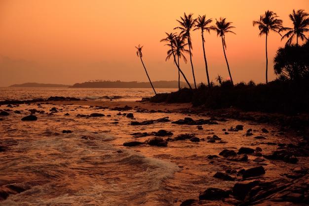 Tropische oranje zonsondergang palm silhouet landschap. sri lanka strand