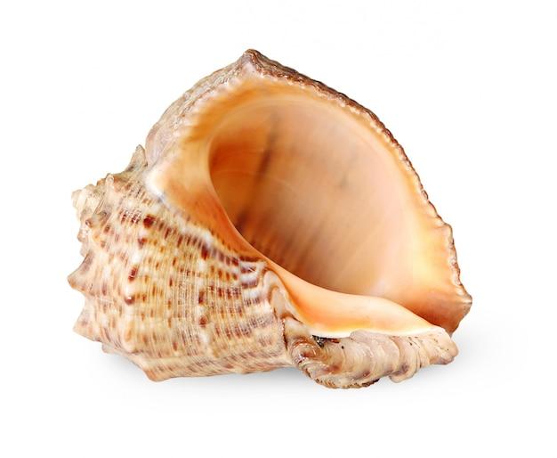 Tropische overzeese shell die op witte achtergrond wordt geïsoleerd