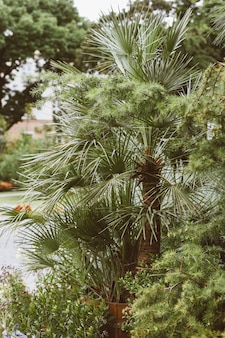 Tropische palm in de tuin, groene bladeren van tropische bosplant voor natuurpatroon en achtergrond