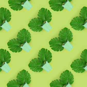 Tropische palm monstera bladeren ligt in een pastel emmers op een gekleurde achtergrond