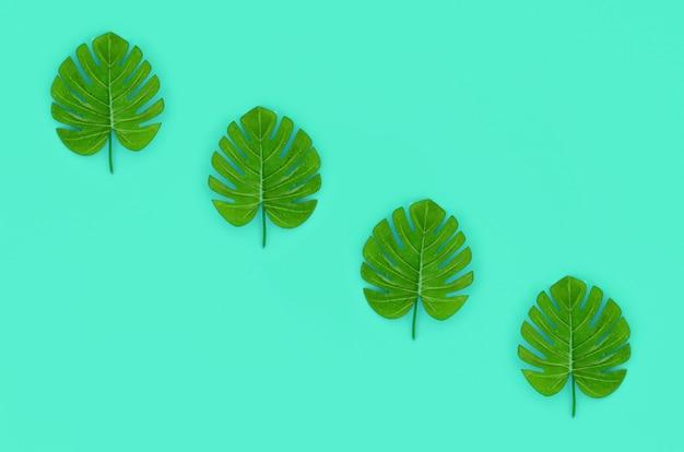 Tropische palm monstera bladeren ligt op groen