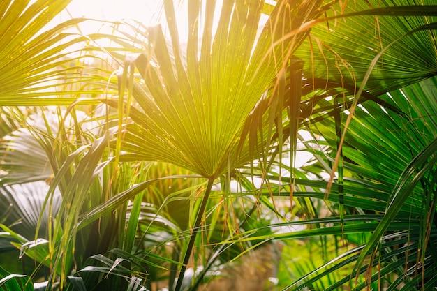 Tropische palmbladen in zonlicht