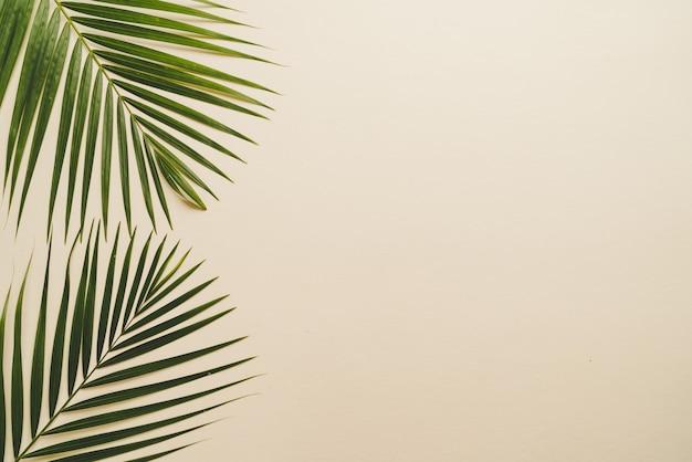 Tropische palmbladen met exemplaarruimte
