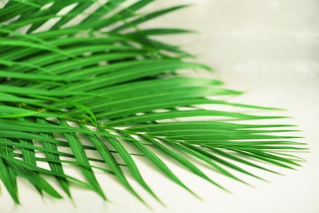 Tropische palmbladen op grijze concrete achtergrond. minimaal zomerconcept. creatieve vlakke lay-out met kopie ruimte. bovenaanzicht groen blad op pittig pastel papier