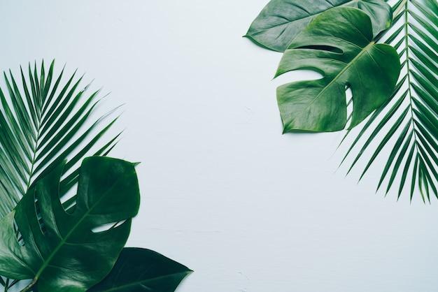 Tropische palmbladen op kleurenachtergrond met copyspace