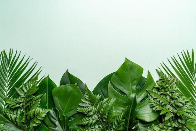Tropische palmbladen op kleurenachtergrond