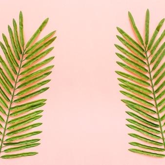 Tropische palmbladen op lichtrose achtergrond