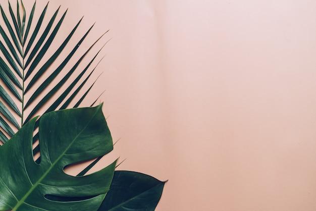 Tropische palmbladenachtergrond