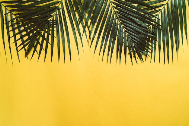 Tropische palmbladeren met kopie ruimte