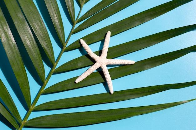 Tropische palmbladeren met zeester op blauwe achtergrond.