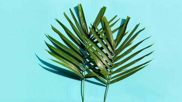 Tropische palmbladeren op blauwe achtergrond.