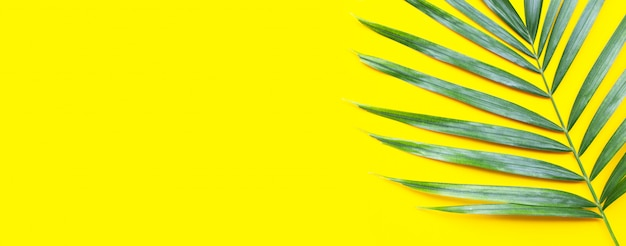 Tropische palmbladeren op gele achtergrond.
