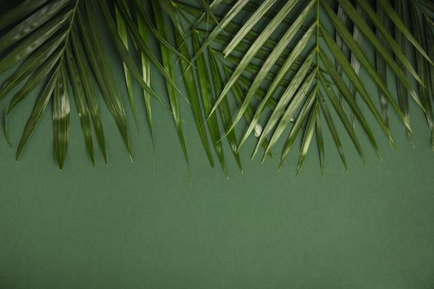 Tropische palmbladeren