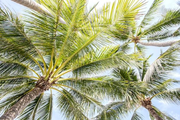 Tropische palmbomen en blauwe hemel
