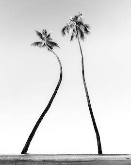 Tropische palmbomen op het strand