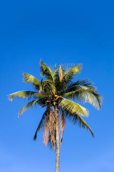 Tropische palmboom in nusa penida bij het eiland van bali, indonesië
