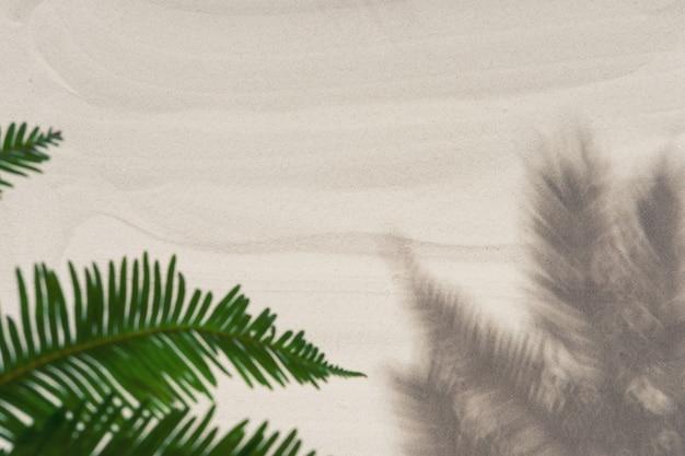 Tropische palmboom laat schaduwen achter
