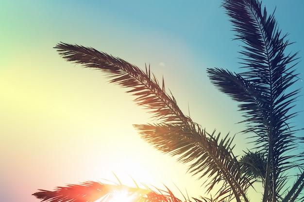 Tropische palmboom met kleurrijke hemel