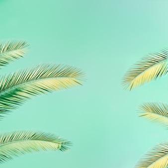 Tropische palmboom met zonlicht op mint