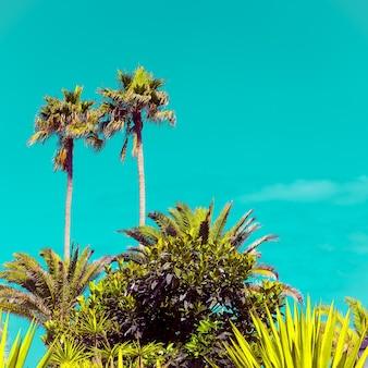 Tropische palmen. minimale reistijd in kunststijl