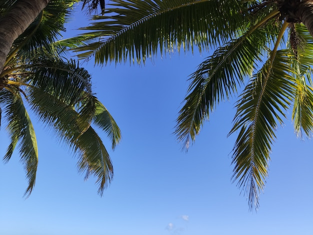 Tropische palmtakken op het overzees met hemel met zonnig licht en glansfilter