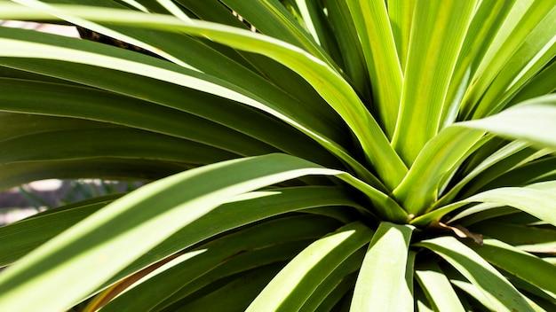 Tropische plant met bladeren