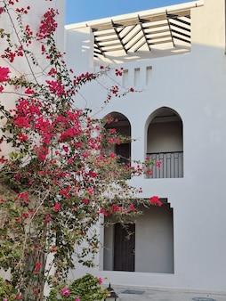 Tropische plant met rode bloemen op beige muur van het huisgebouw