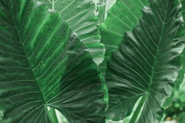 Tropische planten groene bladeren achtergrond
