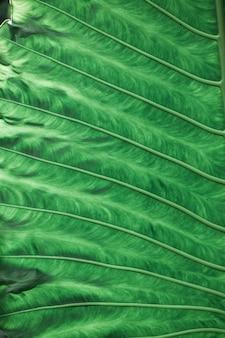 Tropische planten groene bladeren achtergrondstructuur
