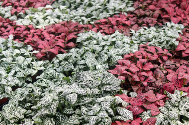 Tropische planten in de kas