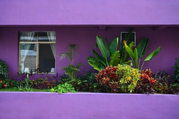 Tropische planten in een natuurlijke omgeving in de buurt van een huis met een paarse muur op een lokale straat van een aziatisch land