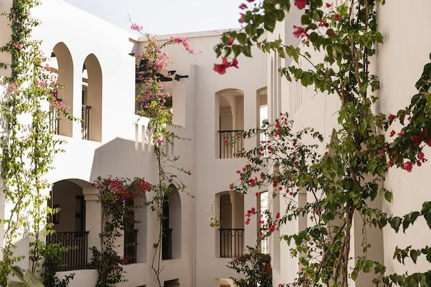 Tropische planten met prachtige rode bloemen en groene bladeren tegen beige gebouw met zonlichtschaduwen