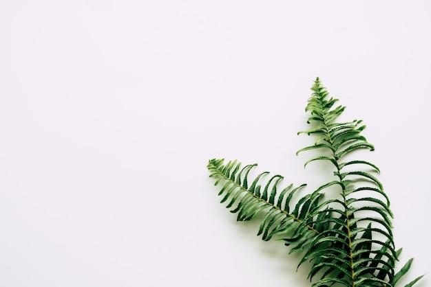 Tropische planten op wit
