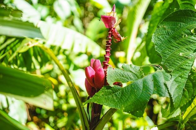 Tropische roze bloem tussen groene planten in de jungle