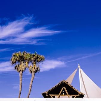 Tropische sfeer. palmen en locatie. minimale mode