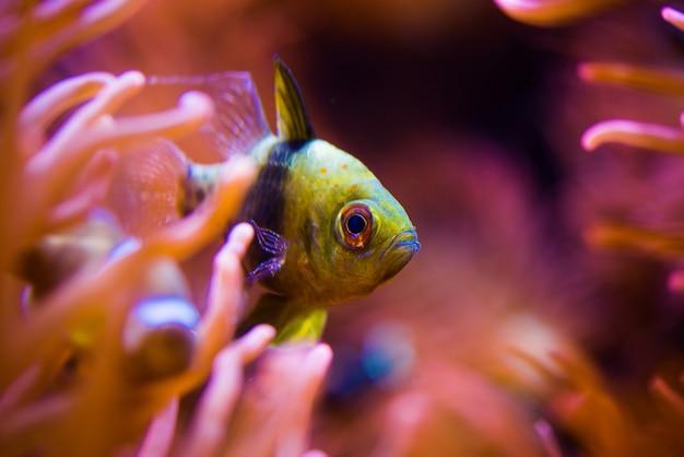 Tropische vissen en het reef