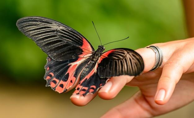 Tropische vlinder aan de kant van het meisje