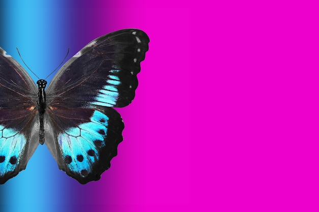 Tropische vlinder op gradiëntachtergrond