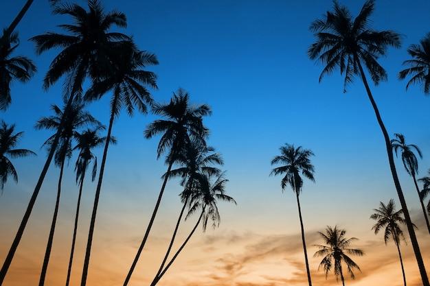 Tropische zonsondergang met palmboomsilhoette bij strand
