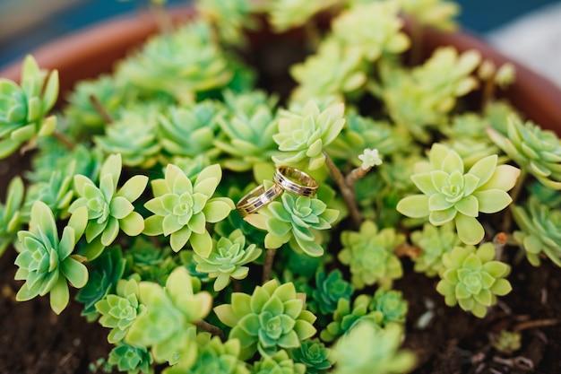 Trouwringen in een struik van aeoniumbloem in een bloempot